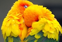 Birds are Awesome! / Parrots and other awesome birds!
