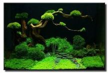 Aquascape / Natural underwater landscapes that fit into a home