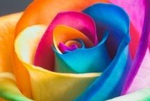 ~Flowers~