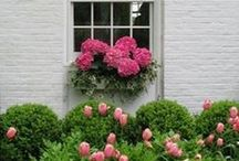 window boxes / by Claire Herman