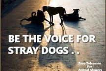 Be the voice for Stray dogs ♥ /  https://www.facebook.com/Roemeensestraathond