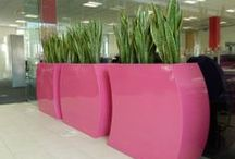 Latest Plant Display designs for new office / A Contemporary Planting scheme showcasing some of our latest products was installed into the new offices of a National Procurement company.