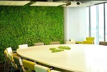 Moss Walls / Preserved Moss Walls for business interiors