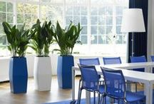 Indoor Office Plants / A collection of a range of indoor office plants and displays.