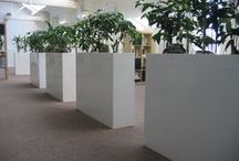 Barrier plants in offices / Creative ways to use plant displays to create green barriers and screens.