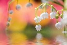 Garden Flower / by Kei Suzuki