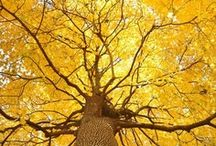 Autumn / by Jj Jeff