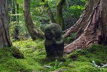 Gardening - The Oriental Garden