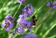 Articles / This board is a collection of articles and resources that outlines what we can do to help bees and the reasons why they need help in the first place.