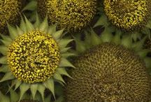 natural textures / by clara viñas
