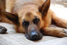 I ❤️ my dog / Sally