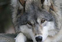❤️Animals❤️ / Animali meravigliosi e cuccioli