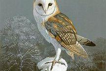 owl / Baykuş