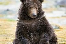 Bear / #ayı #ours #l'ours #Bär #oso