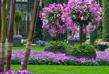 My Garden... My Canvas! / by Sherry-Lynn