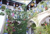 Andalusien / Casa:1 Zementfliesen kommen aus Südspanien. In der Nähe von Córdoba in Andalusien werden sie in Handarbeit hergestellt. Die Region hat vieles zu bieten, was weit über die bekannten Urlaubsorte am Meer hinausgeht.