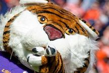 Tiger Spirit / by LSU Residential Life