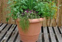 Vegetable gardening / growing vegetables