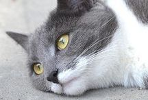 My cat pictures / Pictures of cats for sale  You can see all my canvas prints here: http://tine-nordbred.artistwebsites.com/art/all/all/canvas+prints You can see my pictures for Licensing at 500PX : https://500px.com/TineAngelicaNordbred