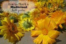 Herbal gardening / growing herbs