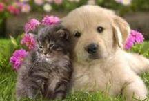 """COMO PERROS y GATOS / A pesar del dicho """"llevarse como el perro y el gato"""", esta selección hace posible que estos animales nos animen a tener una gran sonrisa."""
