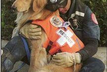 search and rescue / by Bob Coffey