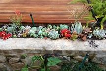 Plants / Recently aware of gardens and all that goes with that - walls / by Kim Lieberman