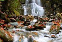 autumn / by Lynn Weipert