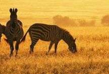 South African Animals