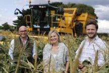 Harvest 2015 / We are excited to be a part of the BBC Two's upcoming Harvest 2015 programme, a true celebration of British Farming! It was our pleasure to welcome the team onto the farm and share how our vegetables are Grown With Love on the south coast. #Harvest2015