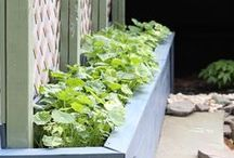 Gardening / Gardening tips and ideas for everyone, from those with a pot of basil on the counter top, to homesteaders on an acreage, and everyone in between.