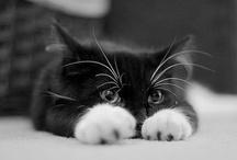 Gatos / by Carmen Pantoja