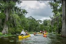 Great Outdoors- Pick Your Passion / There are countless opportunities to explore the great Louisiana Outdoors! With over 20 State Parks, miles of hiking and biking trails, acres of wetlands, forests and nature preserves- you'll find the perfect activity for you.  Camping, Hiking, Biking, Birding, Hunting, Boating, Fishing, Golfing, and on and on... / by Louisiana Travel