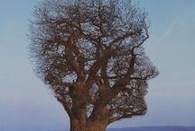 Storm Thorgerson prints