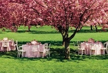 Garden Party Ideas / Inspiration for outdoor events.