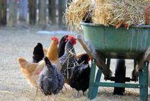 Farms, Fences ...... / by Bettina Sch.