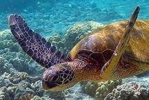 TURTLES / I just love turtles