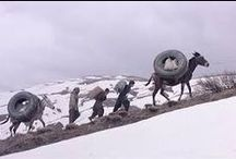 Zamani barayé masti asbha (2000)  / Bahman Gobadi'nin 2000 yılında yönetmenliğini yaptığı Kürtçe / Persçe bir film. Cannes Film Festivalinde Altın kamera ödülü aldı. Bahman Gobadi'nin ilk uzun metrajlı filmi
