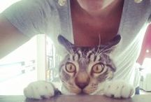 My cats ♡ /  Kyra & Goldie