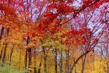 Autumn In The Air / by Ronnette