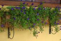 Floreiras / Floreiras de diversos tamanhos e modelos confeccionadas em troncos de madeira reciclada