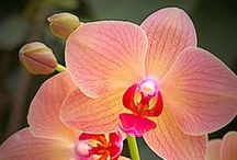 Beautiful Orchid flowers!