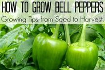 Gardening / Tips and ideas for the perfect healthy home garden