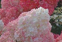 Jardín de Pilar / Arreglos de plantas, adornos y otras...