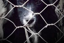 Animal Abuse - Harsher Punishment needed / by Brittany Jayde Blackwell