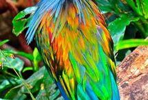 Aves - Birds