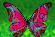 Mariposas, polillas -Butterfly