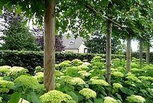 Dream gardens......