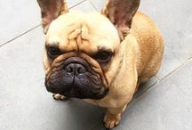 * ~ My Dog ~ * / Watson