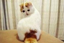 kitty cats / I <3 cats